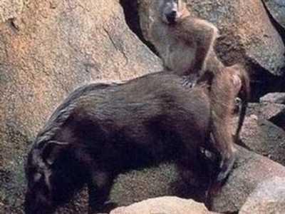人和动物交配图 美女被男人吸奶 成都女子强奸