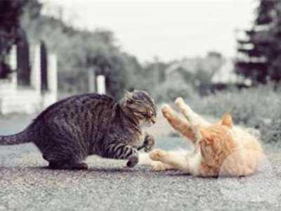 梦见朋友和朋友打架 做梦梦到和好朋友打架