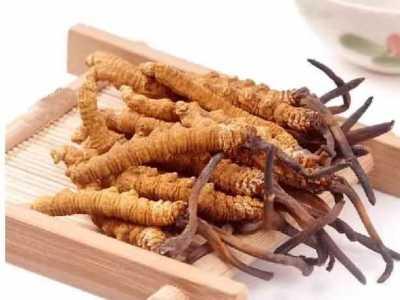 虫草一天吃几根为合适 冬虫夏草怎幺吃最好