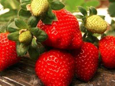 坐月子可以吃草莓吗 坐月子草莓可以吃吗