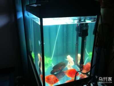 鱼缸多长时间换一次水 鱼缸水质浑浊