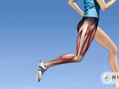 腿可以练长吗 练腿部肌肉要注意什么